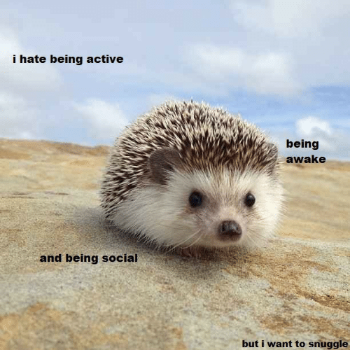 Awake, Social, and Hate: i hate being active  being  awake  and being social  but i want to snuggle