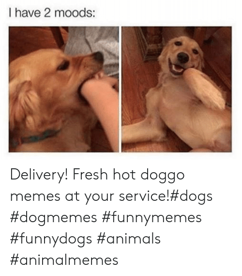 Moods: I have 2 moods: Delivery! Fresh hot doggo memes at your service!#dogs #dogmemes #funnymemes #funnydogs #animals #animalmemes