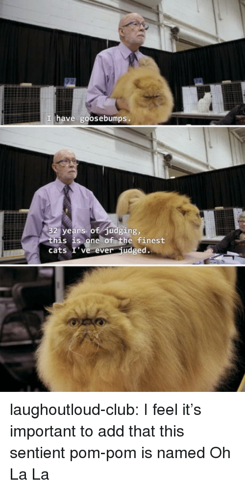goosebumps: I have goosebumps.  32 years of Judging,  his is one of the finest  cats I' ve ever udged. laughoutloud-club:  I feel it's important to add that this sentient pom-pom is named Oh La La
