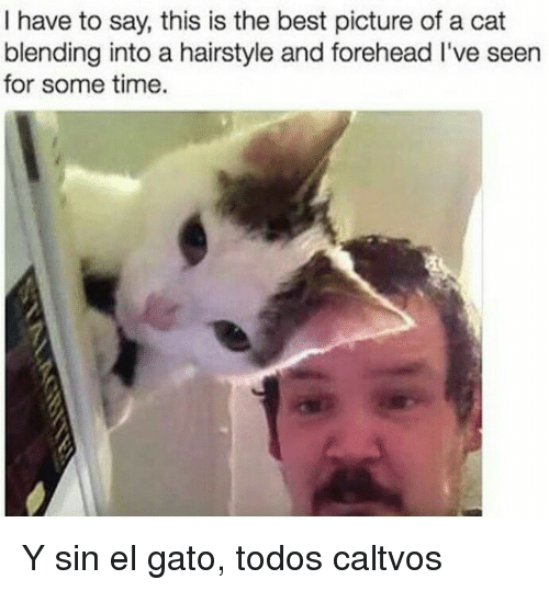 Best, Time, and Cat: I have to say, this is the best picture of a cat  blending into a hairstyle and forehead I've seen  for some time. Y sin el gato, todos caltvos