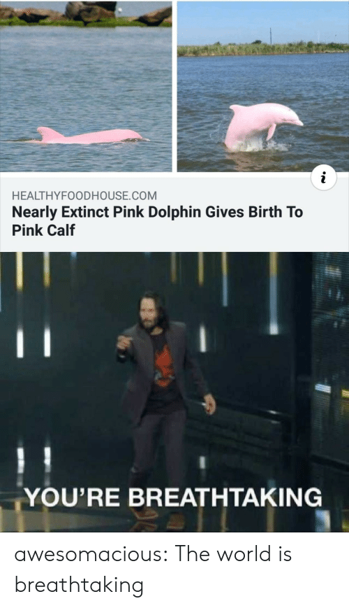 Dolphin: i  HEALTHYFOODHOUSE.COM  Nearly Extinct Pink Dolphin Gives Birth To  Pink Calf  YOU'RE BREATHTAKING awesomacious:  The world is breathtaking