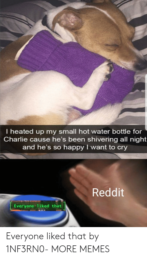 Heated: I heated up my small hot water bottle for  Charlie cause he's been shivering all night  and he's so happy I want to cry  Reddit  Everyone 1iked that Everyone liked that by 1NF3RN0- MORE MEMES