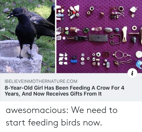 Tumblr, Birds, and Blog: i  IBELIEVEINMOTHERNATURE.COM  8-Year-Old Girl Has Been Feeding A Crow For 4  Years, And Now Receives Gifts From It  O o awesomacious:  We need to start feeding birds now.
