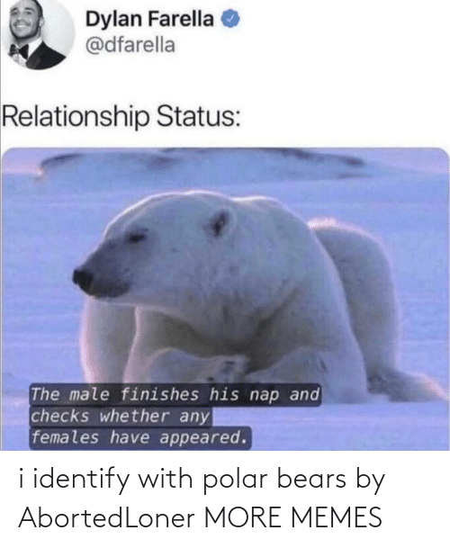 polar bears: i identify with polar bears by AbortedLoner MORE MEMES