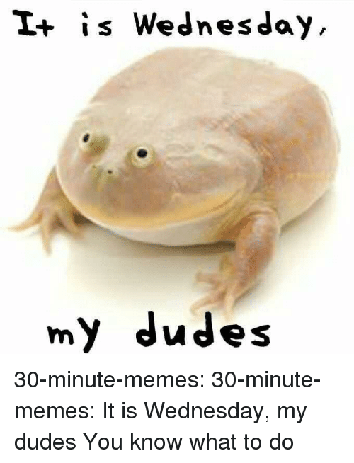 Memes, Tumblr, and Blog: I+ is Wednesday  my dudes 30-minute-memes: 30-minute-memes: It is Wednesday, my dudes You know what to do
