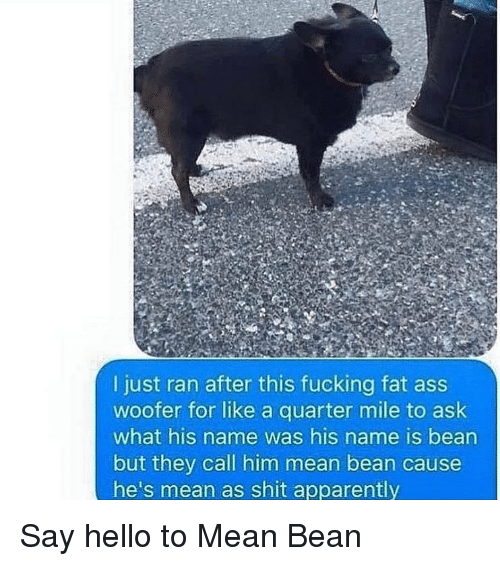Apparently, Ass, and Fat Ass: I just ran after this fucking fat ass  woofer for like a quarter mile to ask  what his name was his name is bean  but they call him mean bean cause  he's mean as shit apparently Say hello to Mean Bean