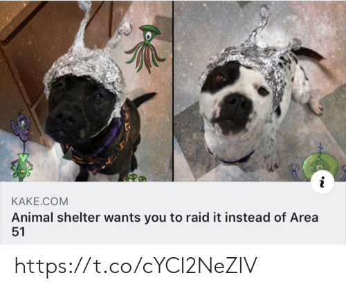 Memes, Animal, and Animal Shelter: i  KAKE.COM  Animal shelter wants you to raid it instead of Area  51 https://t.co/cYCI2NeZIV