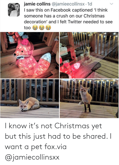 pet: I know it's not Christmas yet but this just had to be shared. I want a pet fox.via @jamiecollinsxx