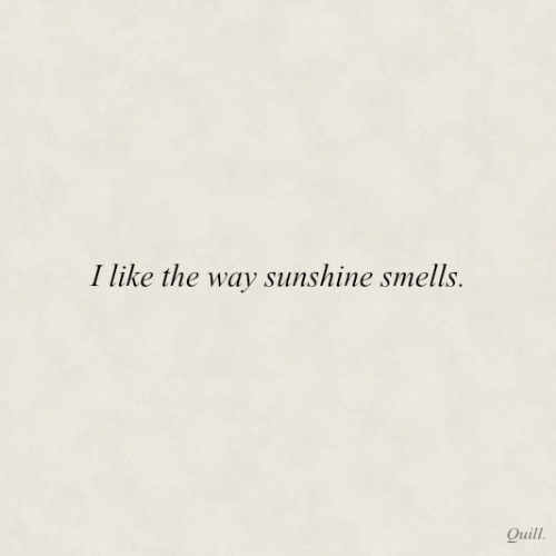 Quill, Sunshine, and Like: I like the way sunshine smells.  Quill