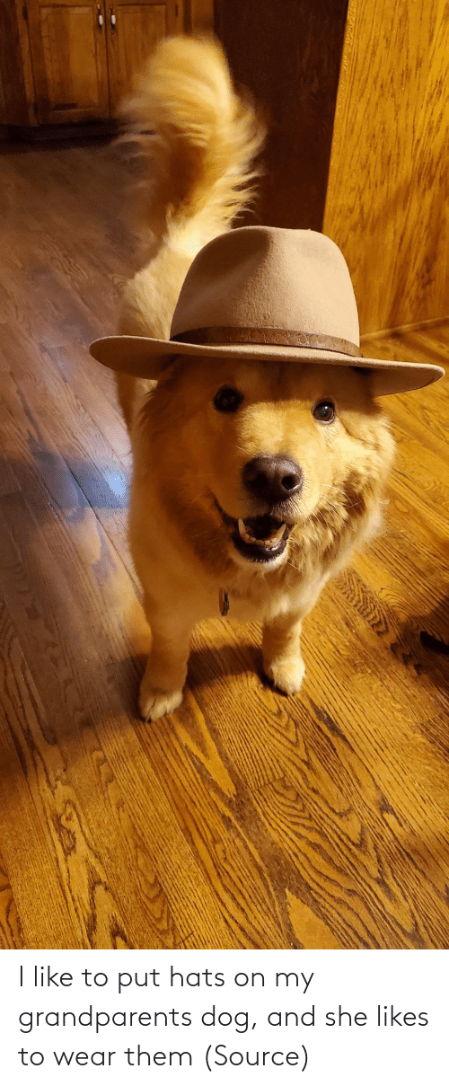 likes: I like to put hats on my grandparents dog, and she likes to wear them (Source)