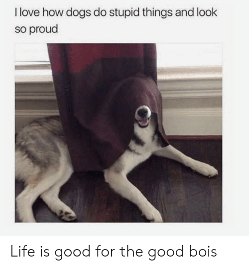 Dogs, Life, and Love: I love how dogs do stupid things and look  so proud Life is good for the good bois