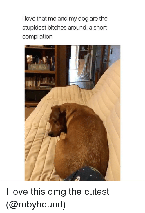 Love, Omg, and Girl Memes: i love that me and my dog are the  stupidest bitches around: a short  compilation I love this omg the cutest (@rubyhound)