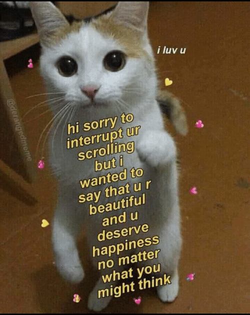 Beautiful, Sorry, and Happiness: i luv u  hi sorry to  interrupt ur  scrolling  but i  wanted to  say that u r  beautiful  and u  deserve  happiness  no matter  what you  might think  @derangedmeme