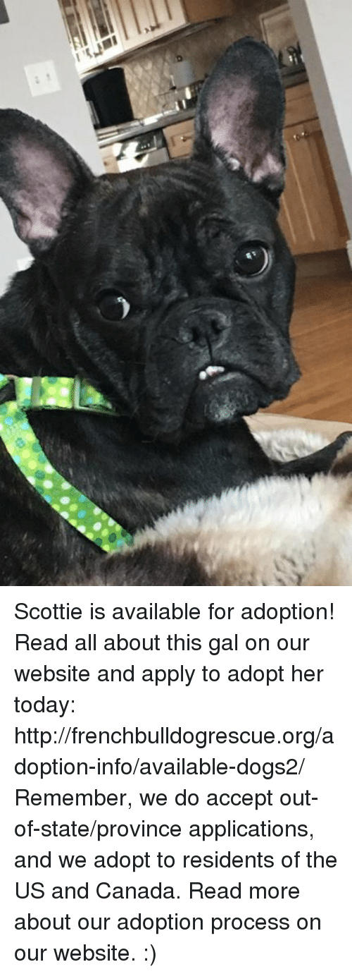 us-and-canada: I m?h1 Scottie is available for adoption! Read all about this gal on our website  and apply to adopt her today: http://frenchbulldogrescue.org/adoption-info/available-dogs2/  Remember, we do accept out-of-state/province applications, and we adopt to residents of the US and Canada. Read more about our adoption process on our website. :)