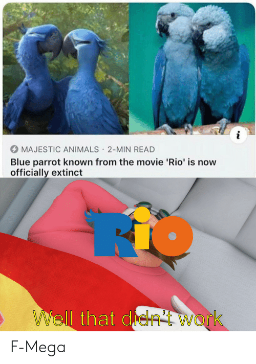 rio: i  MAJESTIC ANIMALS 2-MIN READ  Blue parrot known from the movie 'Rio' is now  officially extinct  .  WWell that de  Work F-Mega