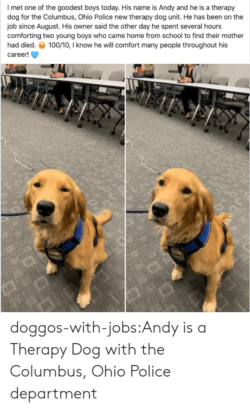 columbus: I met one of the goodest boys today. His name is Andy and he is a therapy  dog for the Columbus, Ohio Police new therapy dog unit. He has been on the  job since August. His owner said the other day he spent several hours  comforting two young boyss who came home from school to find their mother  100/10, I know he will comfort many people throughout his  had died.  career! doggos-with-jobs:Andy is a Therapy Dog with the Columbus, Ohio Police department