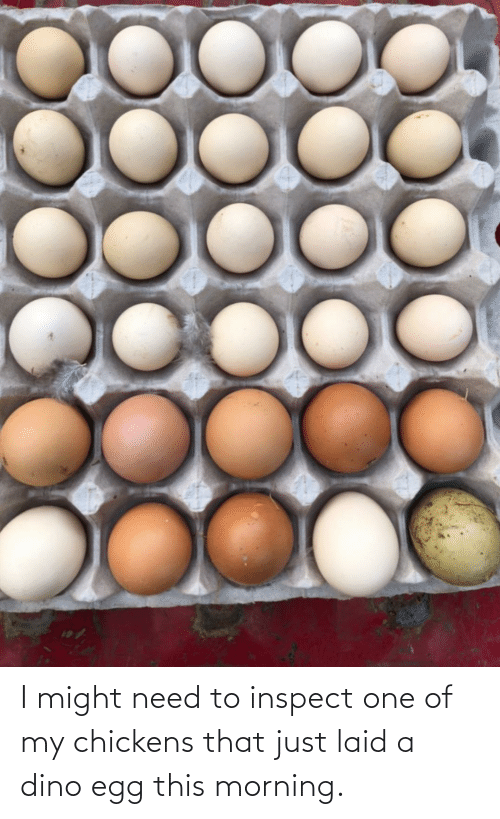 dino: I might need to inspect one of my chickens that just laid a dino egg this morning.