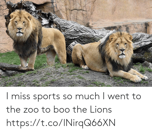 much: I miss sports so much I went to the zoo to boo the Lions https://t.co/lNirqQ66XN