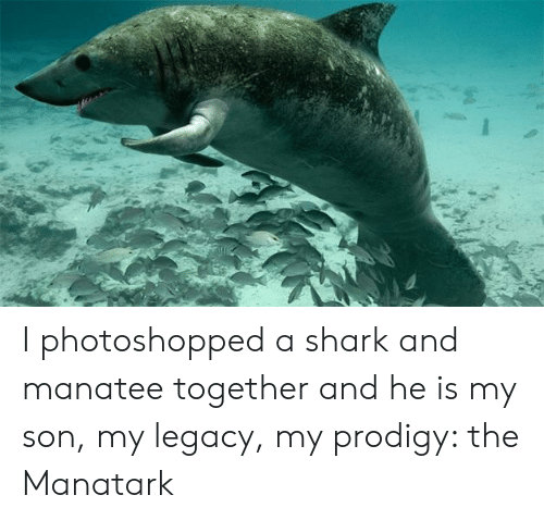 Shark, Legacy, and Prodigy: I photoshopped a shark and manatee together and he is my son, my legacy, my prodigy: the Manatark