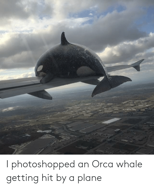 plane: I photoshopped an Orca whale getting hit by a plane