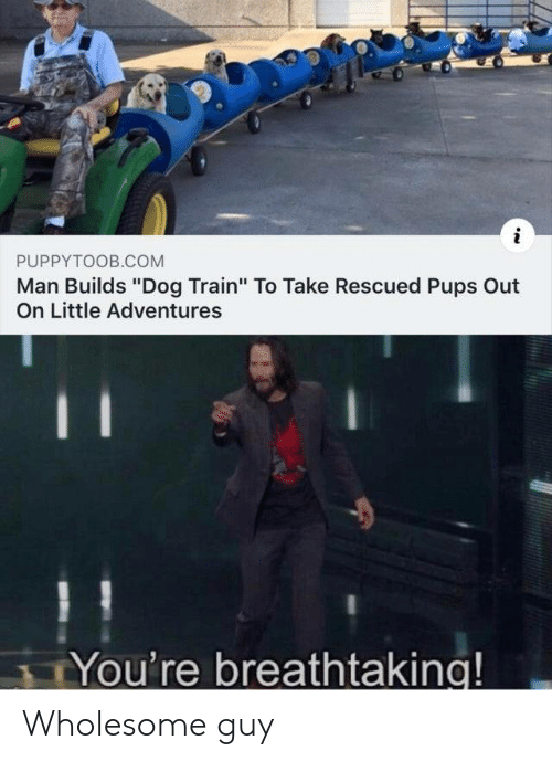 """Train, Wholesome, and Dog: i  PUPPYTOOB.COM  Man Builds """"Dog Train"""" To Take Rescued Pups Out  On Little Adventures  You're breathtaking! Wholesome guy"""