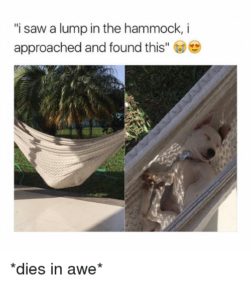"""Hammocking: """"i saw a lump in the hammock, i  approached and found this"""" *dies in awe*"""