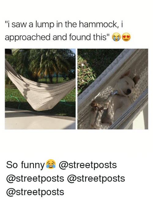 """Hammocking: """"i saw a lump in the hammock, i  approached and found this"""" So funny😂 @streetposts @streetposts @streetposts @streetposts"""