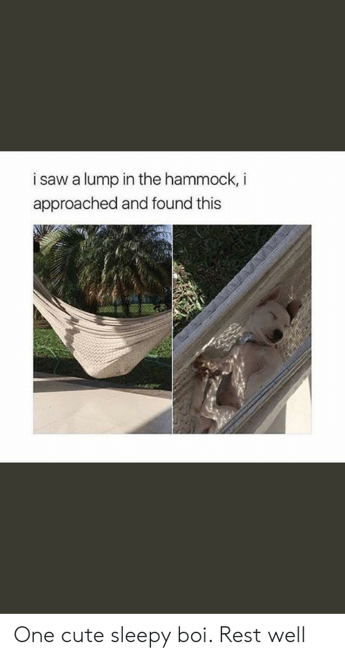 Hammock: i saw a lump in the hammock, i  approached and found this One cute sleepy boi. Rest well