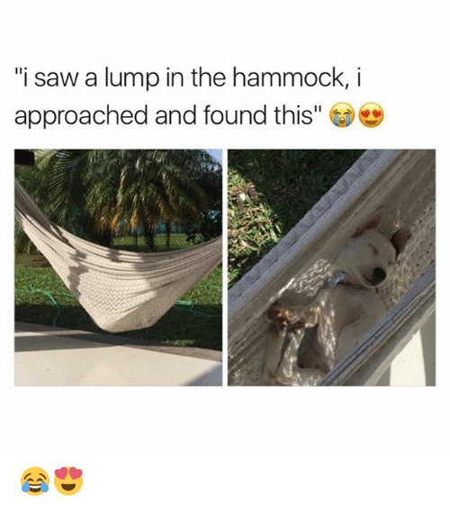 "—˜: ""i saw a lump in the hammock,i  approached and found this"" 😂😍"