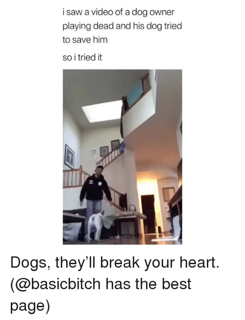 Playing Dead: i saw a video of a dog owner  playing dead and his dog triec  to save him  so i tried it Dogs, they'll break your heart. (@basicbitch has the best page)