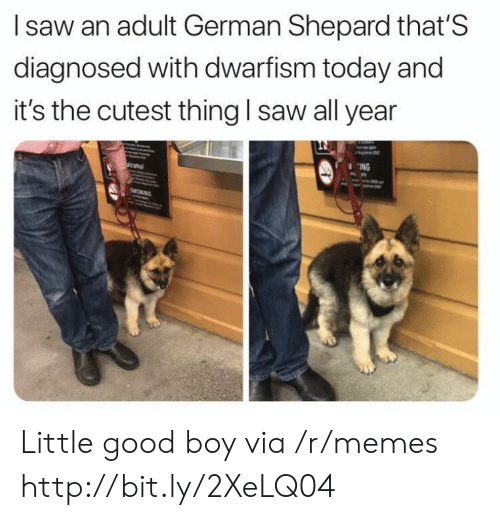Memes, Saw, and Good: I saw an adult German Shepard that'S  diagnosed with dwarfism today and  it's the cutest thing l saw all year  ING Little good boy via /r/memes http://bit.ly/2XeLQ04