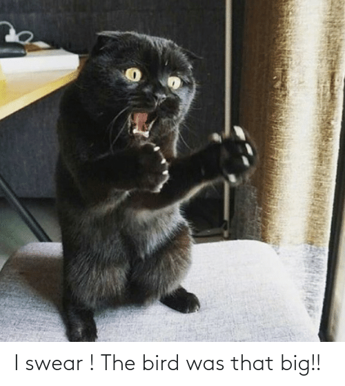 the bird: I swear ! The bird was that big!!