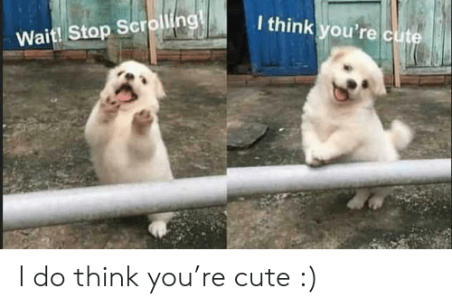 Think You: I think you're cute  Wait! Stop Scrolling! I do think you're cute :)