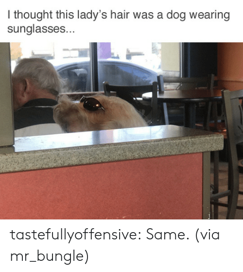 Sunglasses: I thought this lady's hair was a dog wearing  sunglasses... tastefullyoffensive:  Same. (via mr_bungle)
