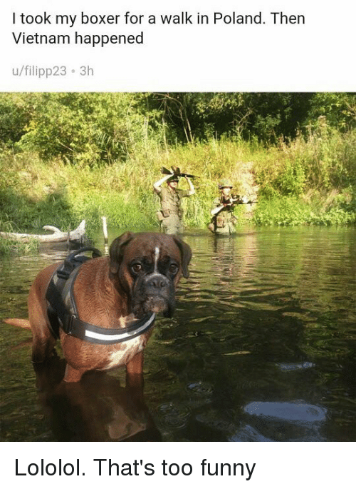lololol: I took my boxer for a walk in Poland. Then  Vietnam happened  u/filipp23 3h Lololol. That's too funny