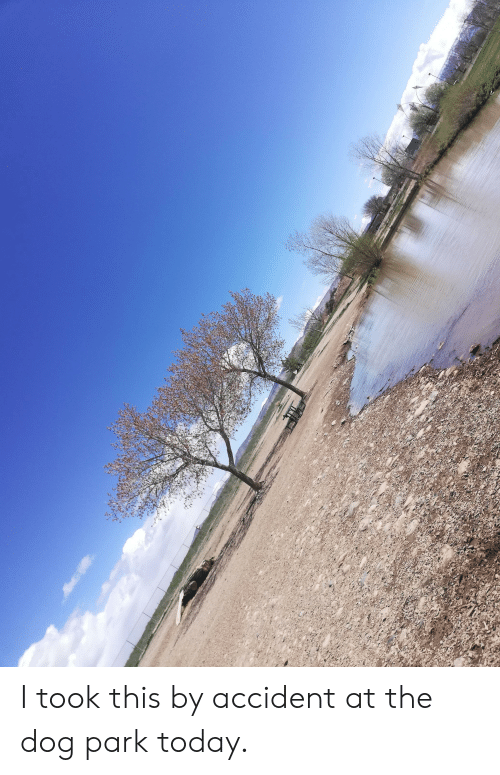 Today, Dog, and Park: I took this by accident at the dog park today.