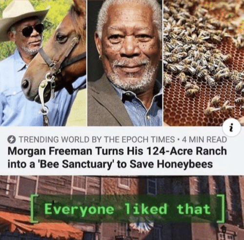 morgan: i  TRENDING WORLD BY THE EPOCH TIMES 4 MIN READ  Morgan Freeman Turns His 124-Acre Ranch  into a 'Bee Sanctuary' to Save Honeybees  Everyone liked that