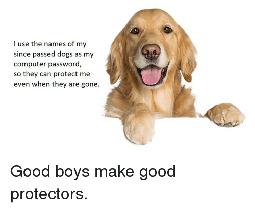 Dogs, Computer, and Good: I use the names of my  since passed dogs as my  computer password,  so  they can protect me  even when they are gone. <p>Good boys make good protectors.</p>