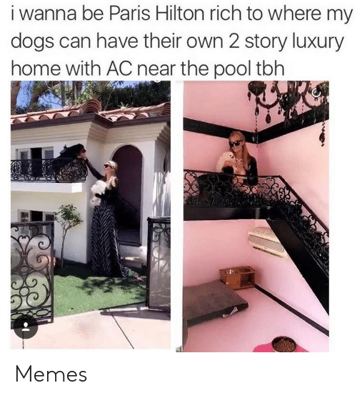 Pool: i wanna be Paris Hilton rich to where my  dogs can have their own 2 story luxury  home with AC near the pool tbh Memes
