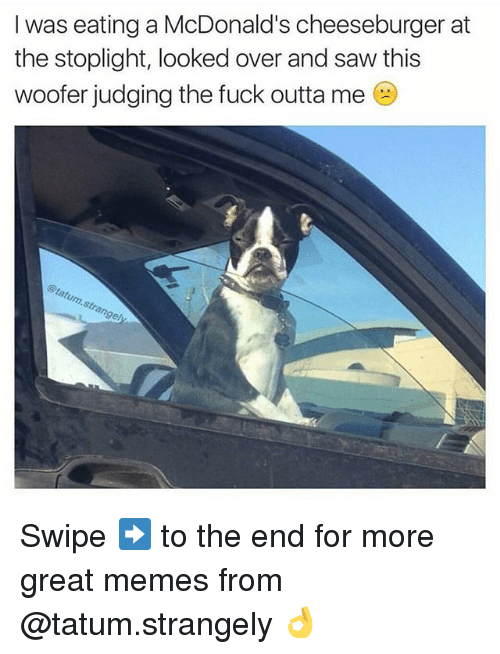 stoplight: I was eating a McDonald's cheeseburger at  the stoplight, looked over and saw this  woofer judging the fuck outta me  gel Swipe ➡️ to the end for more great memes from @tatum.strangely 👌