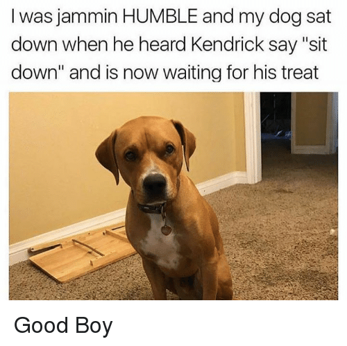 """Jammin: I was jammin HUMBLE and my dog sat  down when he heard Kendrick say """"sit  down"""" and is now waiting for his treat Good Boy"""