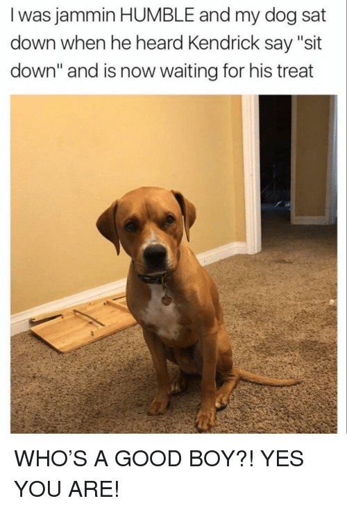 """Jammin: I was jammin HUMBLE and my dog sat  down when he heard Kendrick say """"sit  down"""" and is now waiting for his treat WHO'S A GOOD BOY?! YES YOU ARE!"""