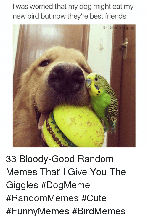 Cute, Dumb, and Friends: I was worried that my dog might eat my  new bird but now they're best friends  IG: @dumb jpeg 33 Bloody-Good Random Memes That'll Give You The Giggles #DogMeme #RandomMemes #Cute #FunnyMemes #BirdMemes