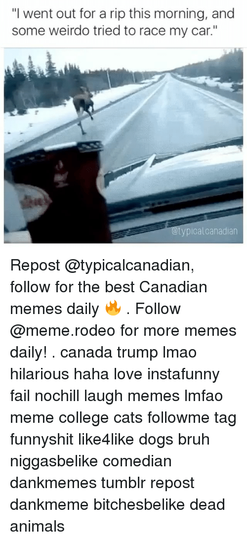 """Canadian Meme: """"I went out for a rip this morning, and  some weirdo tried to race my car.""""  Otypicalcanadian Repost @typicalcanadian, follow for the best Canadian memes daily 🔥 . Follow @meme.rodeo for more memes daily! . canada trump lmao hilarious haha love instafunny fail nochill laugh memes lmfao meme college cats followme tag funnyshit like4like dogs bruh niggasbelike comedian dankmemes tumblr repost dankmeme bitchesbelike dead animals"""