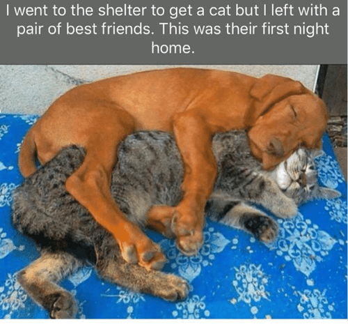 Friends, Memes, and Best: I went to the shelter to get a cat but I left with a  pair of best friends. This was their first night  home
