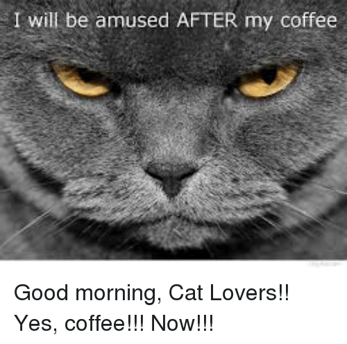 I Will Be Amused After My Coffee Good Morning Cat Lovers Yes