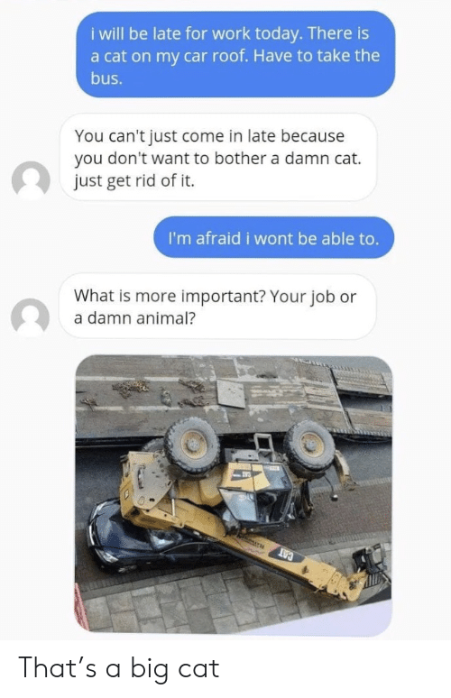 big cat: i will be late for work today. There is  a cat on my car roof. Have to take the  bus.  You can't just come in late because  you don't want to bother a damn cat.  just get rid of it.  I'm afraid i wont be able to.  What is more important? Your job or  a damn animal?  CAT That's a big cat