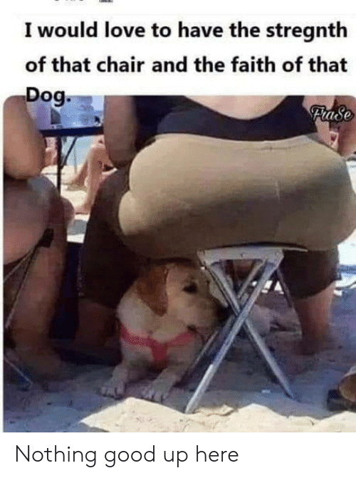 Love, Good, and Chair: I would love to have the stregnth  of that chair and the faith of that  Dog.  Flase Nothing good up here