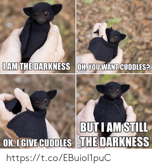 iam: IAM THE DARKNESS OH, YOU WANT CUDDLES?  BUTI AMSTILL  OK,IGIVE CUDDLES THE DARKNESS https://t.co/EBuioI1puC