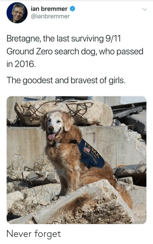 9/11, Girls, and Zero: ian bremmer  @ianbremmer  Bretagne, the last surviving 9/11  Ground Zero search dog, who passed  in 2016.  The goodest and bravest of girls.  MA Never forget
